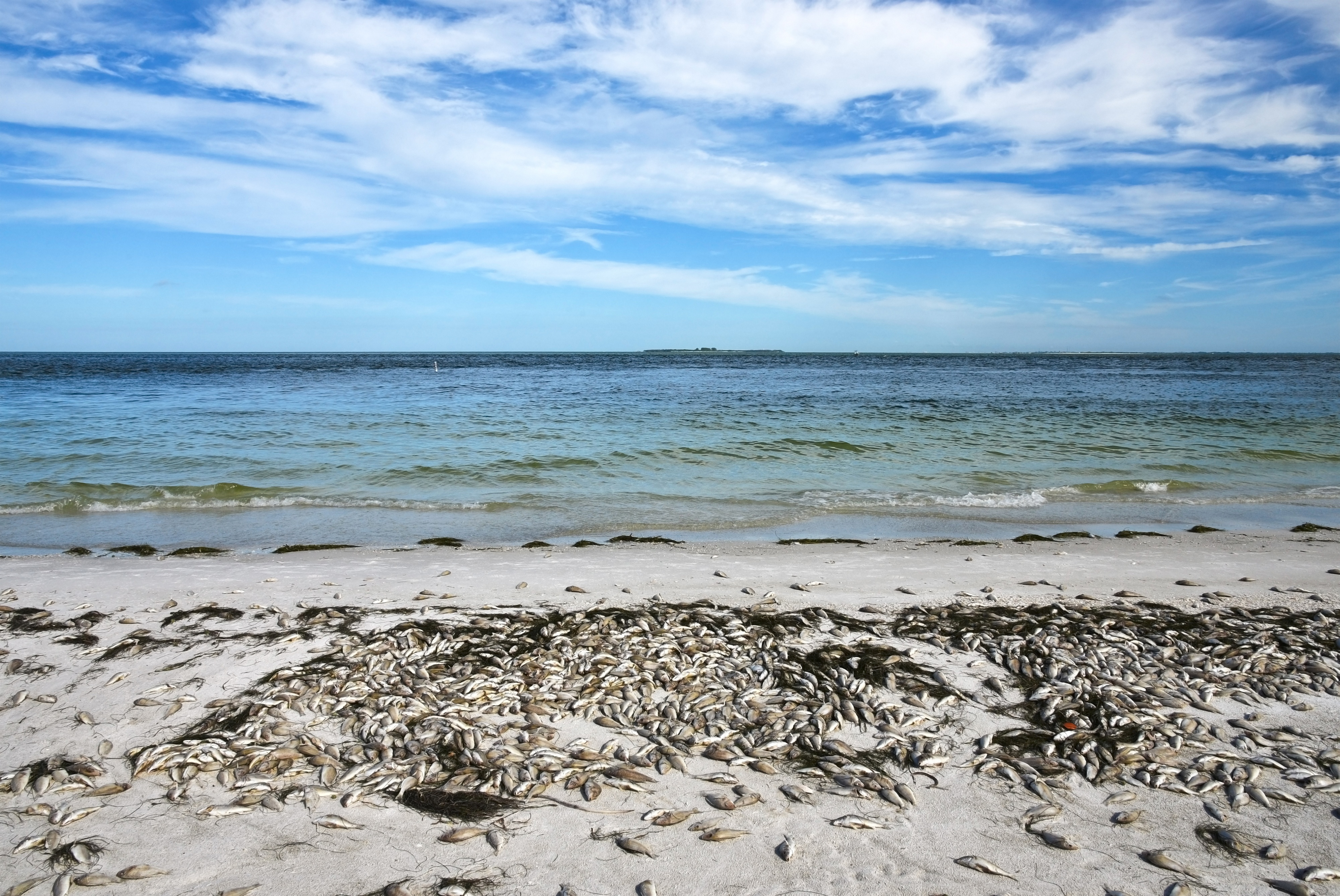 How Red Tide Affects Your Waterfront Property